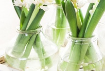 White Hyacint Inpiration