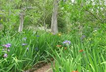 Gardens to Visit / by June Harris