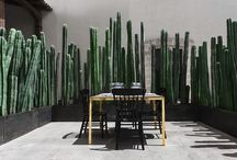 Planting - HEDGES