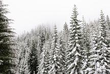 season ● winter