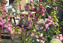 My gardens / Tuin thuis en vakantietuinen