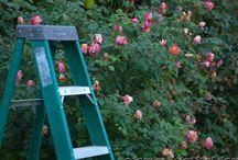 blogy zahrady