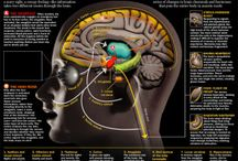 Стресс - анатомия и физиология