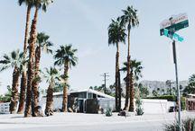 ::: palm tree :::