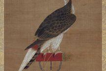 faucon. royal