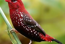 Birds wonderful color