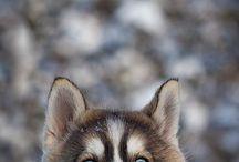 honden fotografie / ideeen voor fotograferen honden