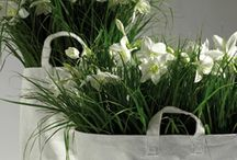 green and white plants