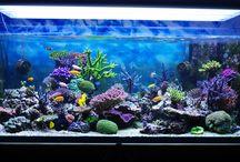 display aquário