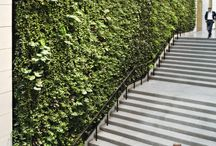 Public Spaces Vertical Gardens