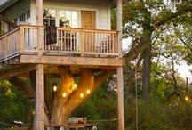Casette sugli alberi