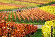 paesaggi del vino / paesaggi relativi al vino