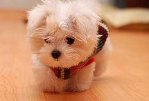 Cute =D / by Yvonne Ingrid