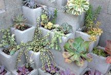 Növények-kert