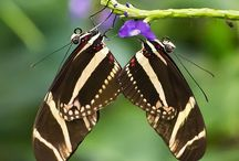 Butterfly Magic!