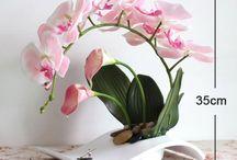 orchidea kompozycje