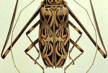 Bugs böcekler