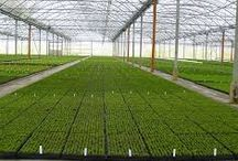 Hydroponic Supplies / Hydroponic supplies for your vegetables plants
