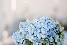 •  LIGHT BLUE WEDDING •