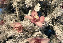 Cymbidium Christmas
