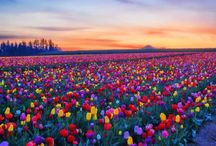 Tulips and other pretty flowers! / by Missy McGuffey