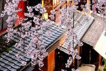 Japanese Blossom