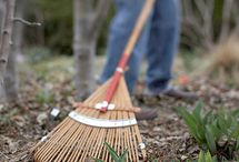Ideas for Yard Care / by Southern Lady's Teacup Poodles Smith