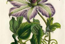 Акварель, ботаника