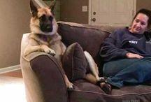 Vtipné zvieratká. Lebo pri HIT je dôležitý pozitívny prístup a žiaden stres! ;)
