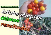 Faça uma adubação simples e colha uma super colheita