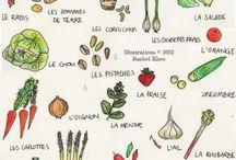 French / Vocabulário e estudo de francês