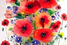 Papaver en korenbloem / poppies and cornflowers