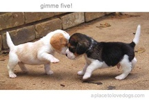 Puppies  <3 / by Missy Osha