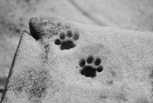Tier Spuren