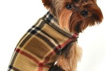 Cute Dog Clothing / Adorable Dog Clothing from OrganicPetBoutique.com