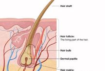 Science of the Hair & Scalp