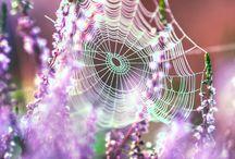 pókhálók