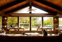 The Cat House Cats / The Cat House on the Kings is the largest no-kill, no-cage cat sanctuary in California, housing over 700+ cats on a 12 acre property. The Cat House is a dream life for a cat without a home, with plenty of trees to climb, couches, tables, chairs, computers and pretty much everything else imaginable to climb and sleep on.   | www.petnook.in #petnook