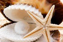 Kagylók , korallok