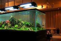 Aquaria / Large aquaria in home like settings. Looking for nice ways to integrate tanks in houses.