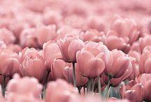 :::::: flower ::::::