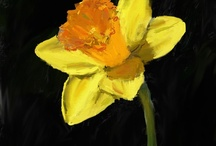Daffodil Paintings