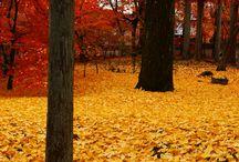 Fall!  / by Sierra Stacy