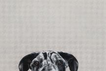 Dogs: Art 2 D 13 / by Cinthia Kasper