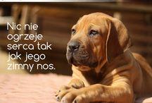 Psie cytaty