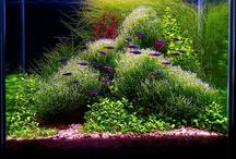 Aquascaping / by Nerice Lochansky