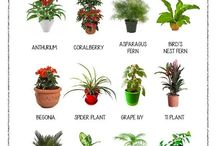 House plants / Indoor plants, container planting ideas, contemporary house plant looks