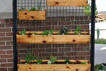 vertical kitchen herbs garden