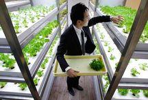SOCIAL - URBAN FARMING