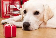 Christmas Pet Safety / The festive season can be a strange time for our pets. Here are some tips to keep them safe and happy this festive season.